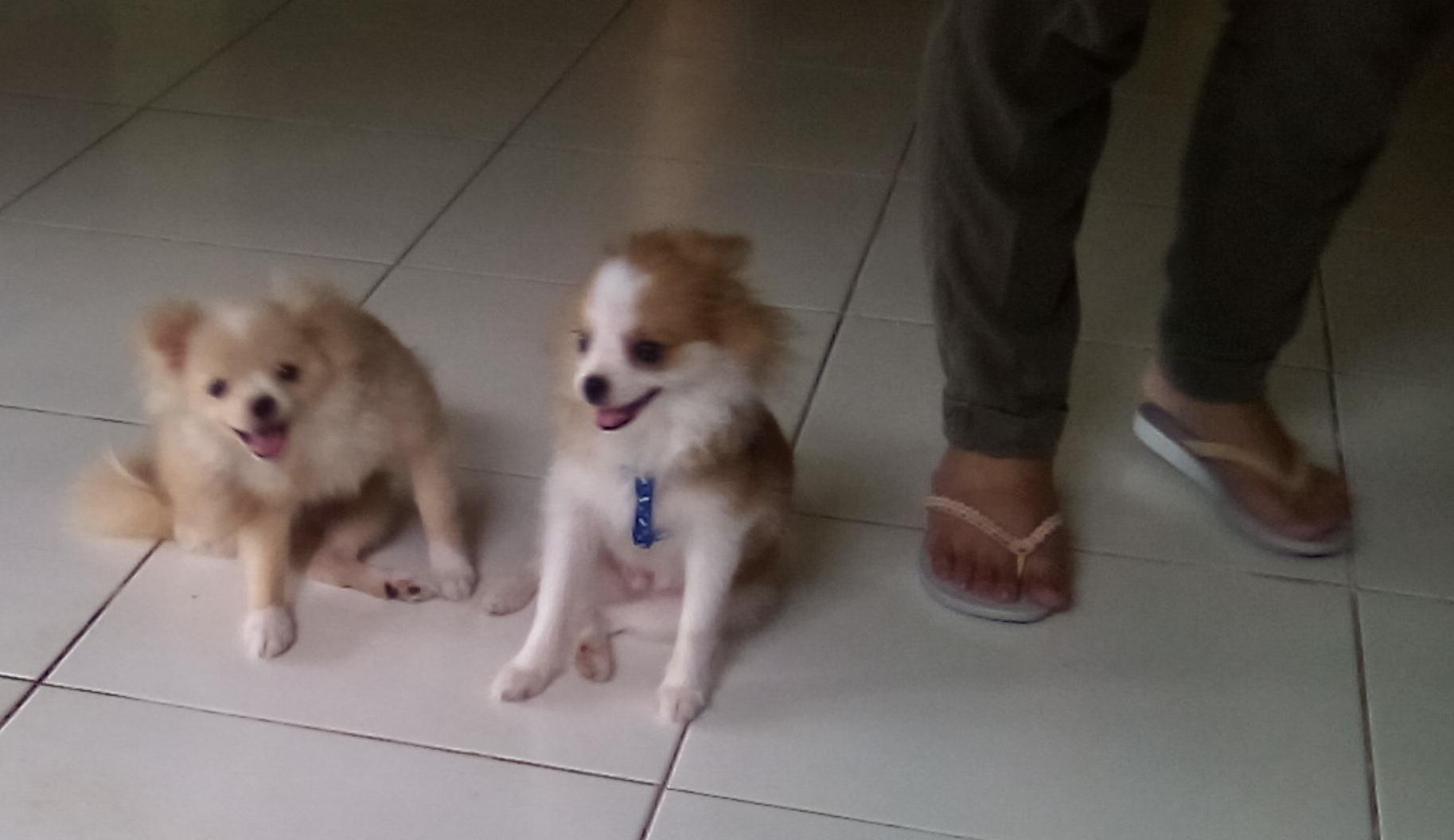 Dogs sitting